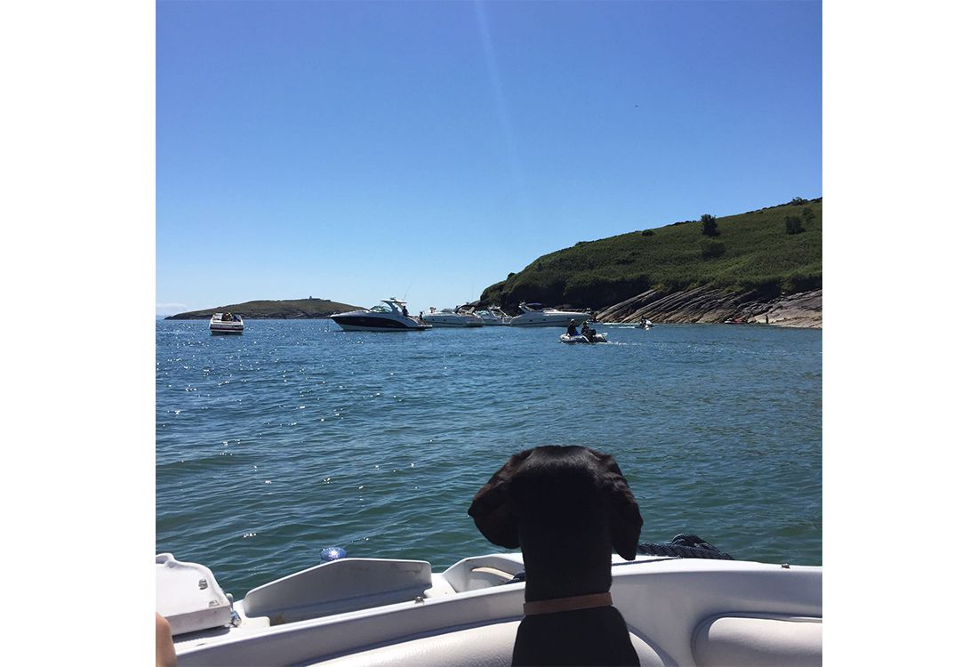 a dogs day out on a boat in Abersoch harbour