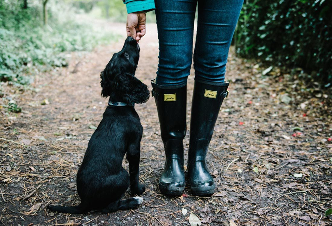 A guide to the best dog-friendly walks this autumn in Cornwall, from secret beaches to venturing deep into the cornish woodland.