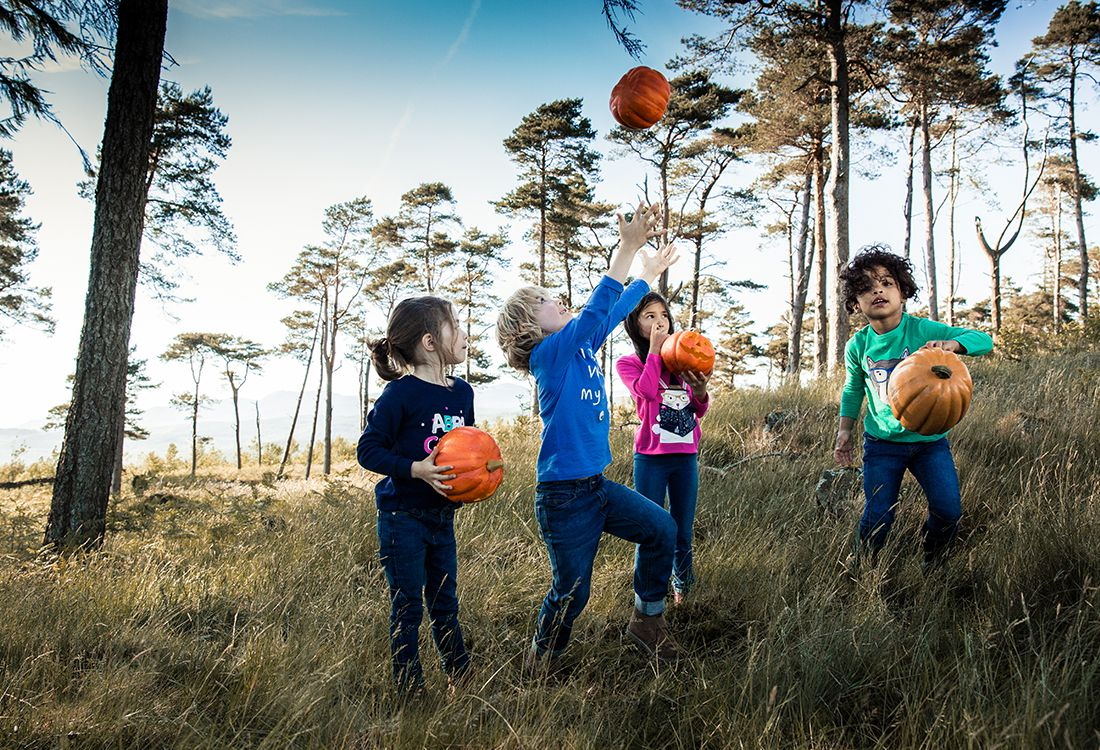 Let your little ghouls' imaginations run wild with scary storytelling with the zoo's witch, pumpkin carving, wand making and broomstick flying