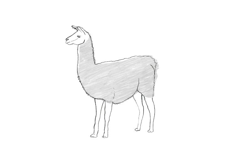 illustration of llama