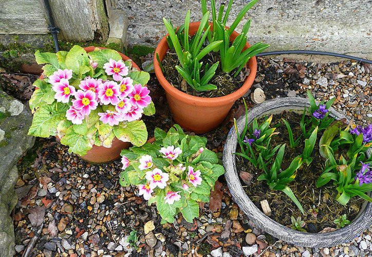 allotment and small green spaces tips & tricks this spring summer