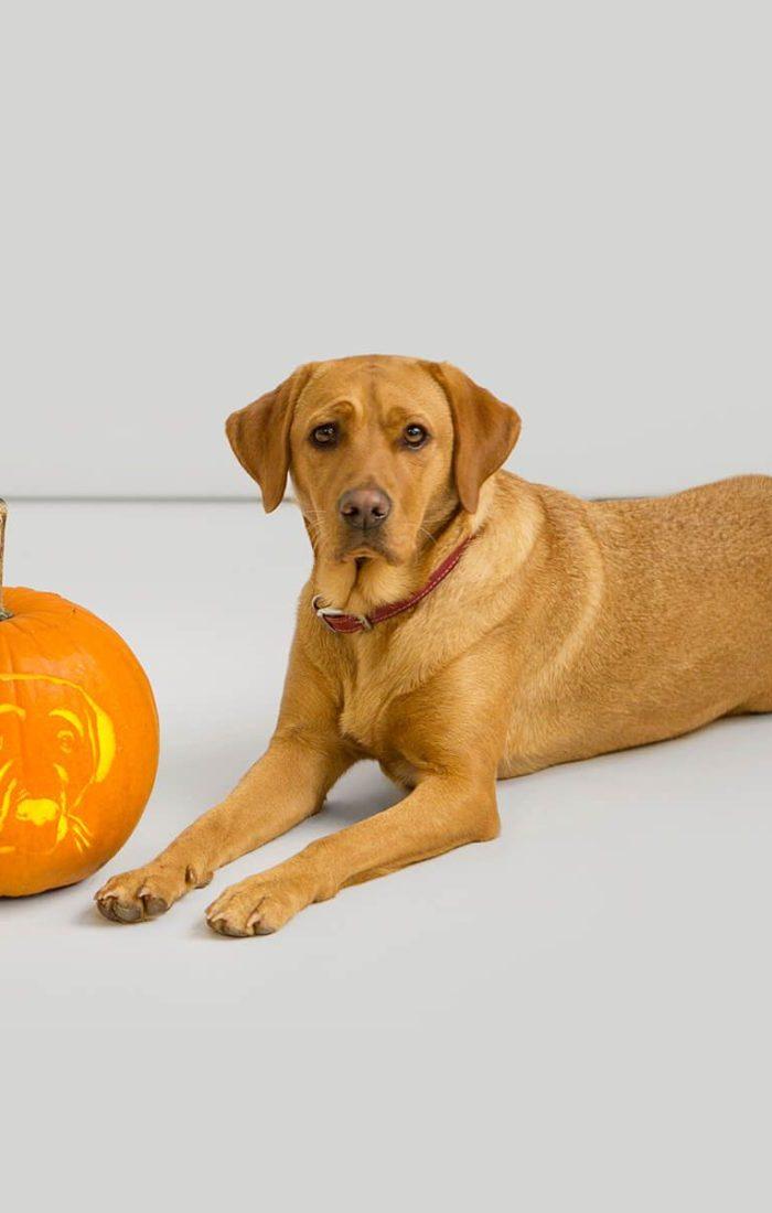 dog_pumpkin_1