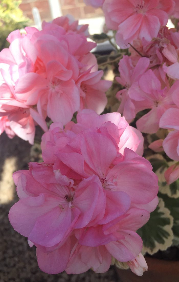 Kelmarsh flower