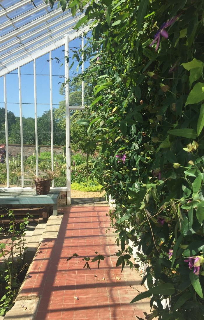 Kelmarsh greenhouse (1)
