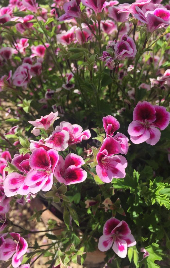 Kelmarsh flower (1)
